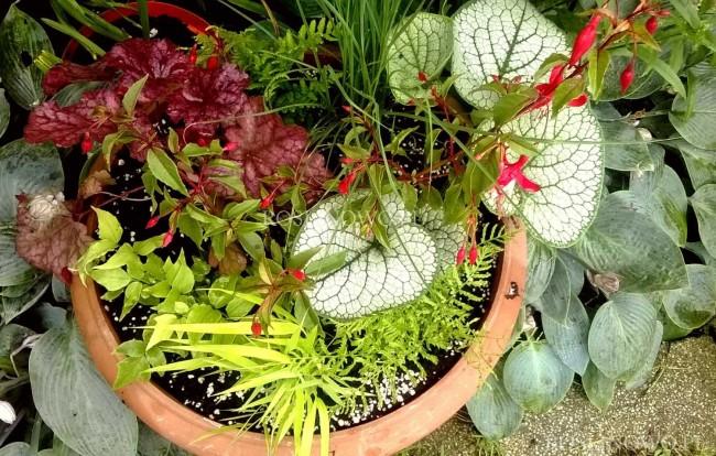 Pejzażowe Ulistnienie - zestaw roślin na balkon, taras lub do ogrodu. 7 sadzonek