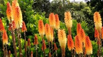 Rośliny egzotyczne do twojego ogrodu