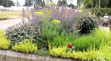 Byliny ogrodowe o właściwościach zdrowotnych
