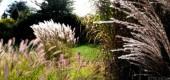 Miskanty – malownicze trawy ozdobne.