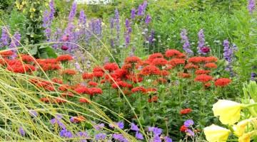 Top 10 najpiękniejszych gatunków bylin kwitnących całe lato.