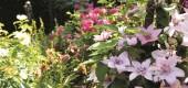 Ochrona roślin przed upałami – 5 rzeczy o których należy pamiętać.