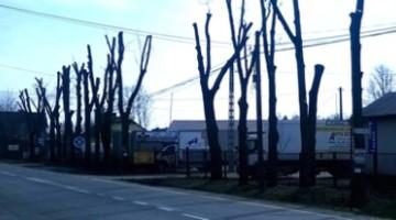 """""""RZEŹ"""" drzew w miastach"""