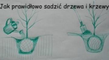 Jak prawidłowo sadzić drzewa i krzewy.