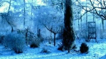 Zimowe zagrożenia w ogrodzie
