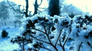 Ogród Zimą - zabezpieczenie roślin na zimę