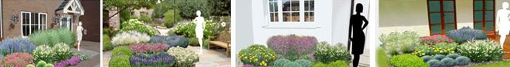 Projekty ogrodów + sadzonki
