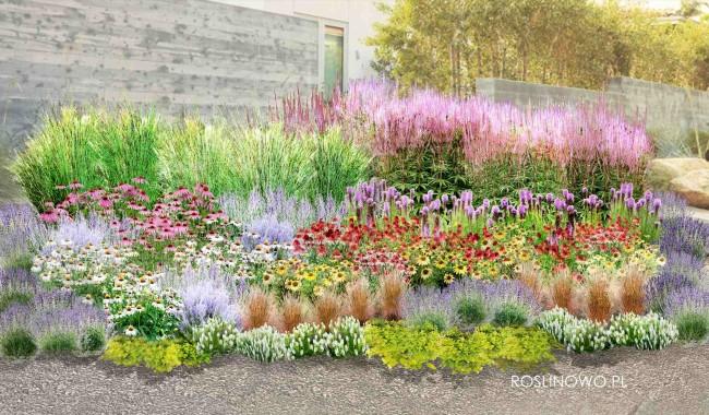 """Gotowy projekt ogrodu - """"Jeżówkowe Rodos"""". Zestaw (Projekt + 119 sadzonek)"""