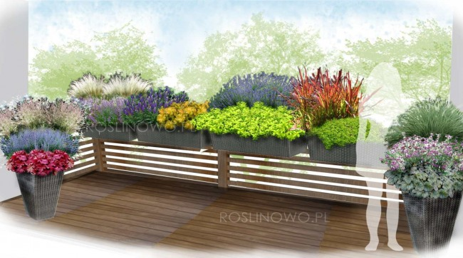 """Gotowy projekt ogrodu (rabata) - """"Kompozycja bylinowa na balkon"""" (BEZ SADZONEK)."""