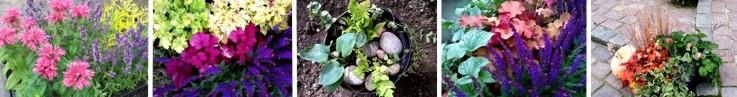 Zestawy roślin