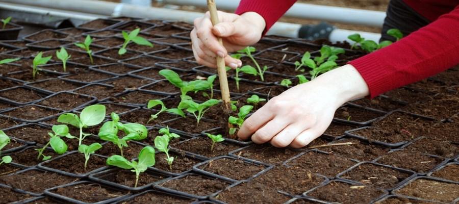 Wszystkie rośliny sadzimy ręcznie