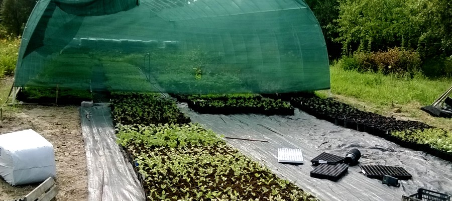 13 lat doświadczenia w uprawie roślin ozdobnych do ogrodu