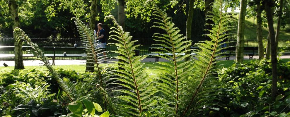rośliny zimozielone pozostają atrakcyjnie także zimą