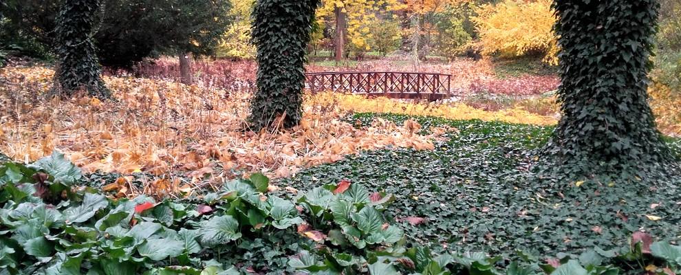 krajobraz ogrodowy z roślinami zimozielonymi