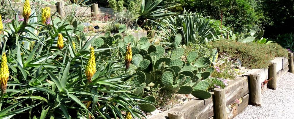 Sukulenty to rośliny o egzotycznym wyglądzie.