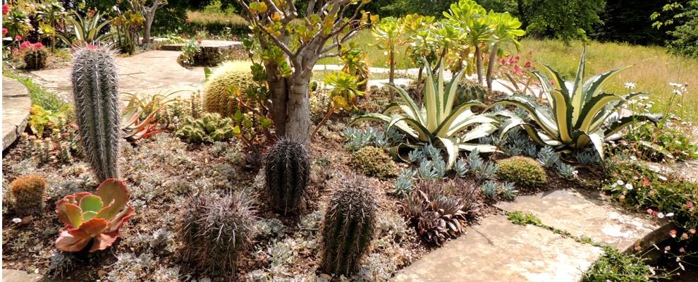 Rośliny egzotyczne o charakterystycznych liściach.