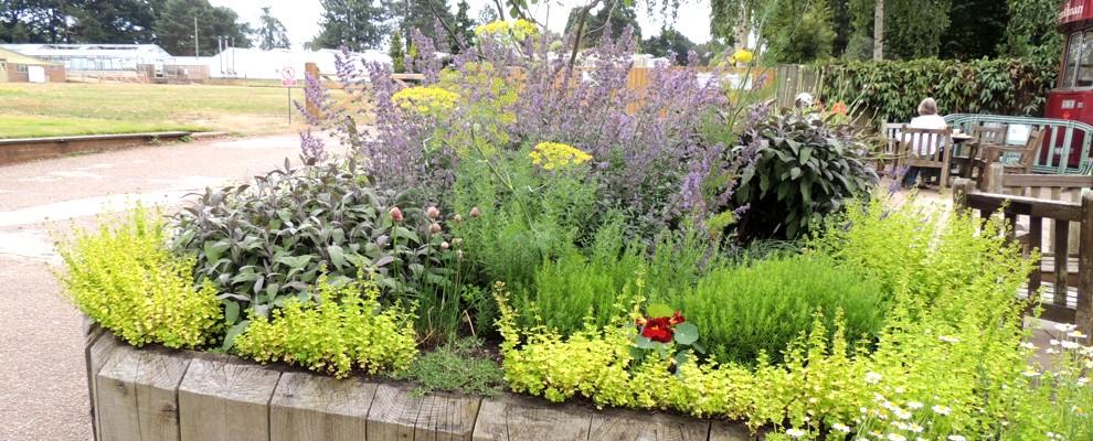Rabata podwyższana z ziołami ogrodowymi