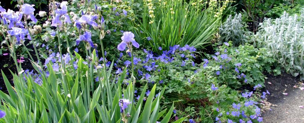 Rabata bylinowa w niebieskim odcieniu.