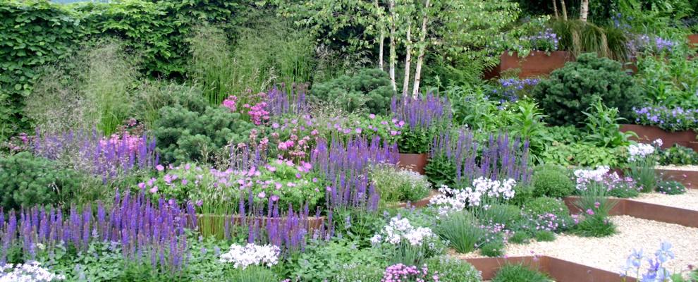 Szałwia omszona obowiązkowa w każdym ogrodzie.