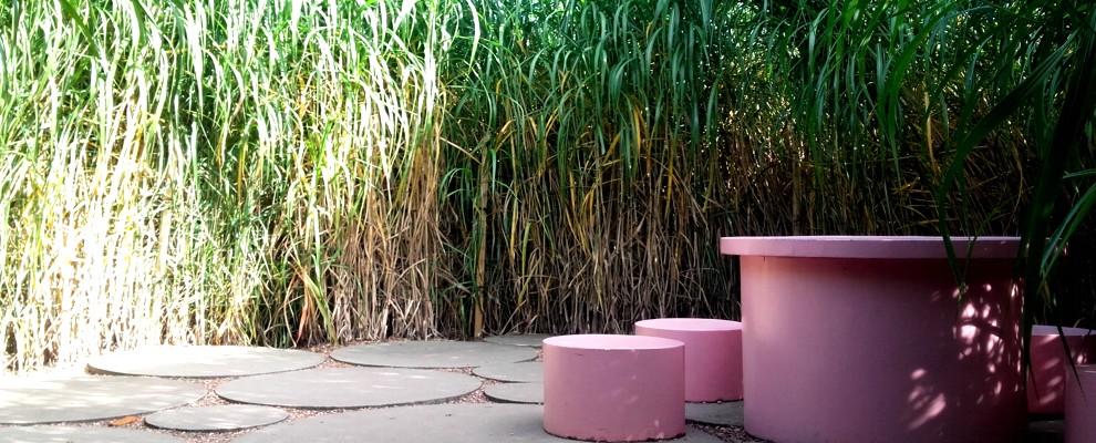 Miskant olbrzymi w pięknej scenerii ogrodowej.