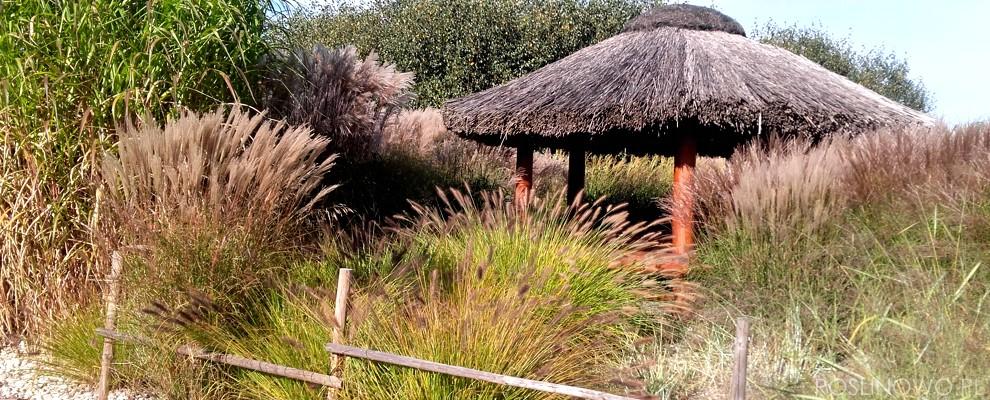 Ogród traw wieloletnich ozdobnych.