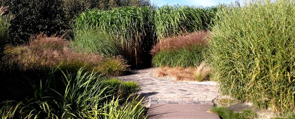 Malowniczy krajobraz w roli głównej trawy wieloletnie ogrodowe