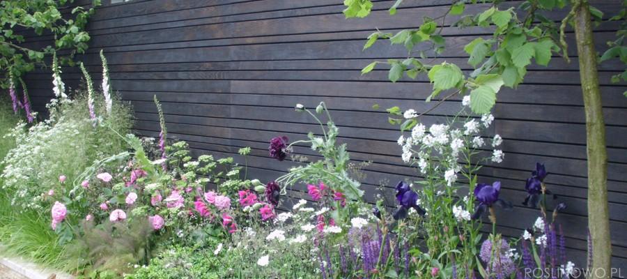 Rabata w skład której wchodzą byliny wieloletnie długo kwitnące