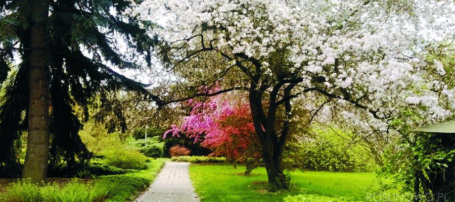 wiosenne kwitnienie drzew