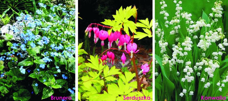 byliny wiosny 2