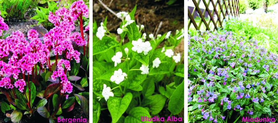 byliny wiosny 1