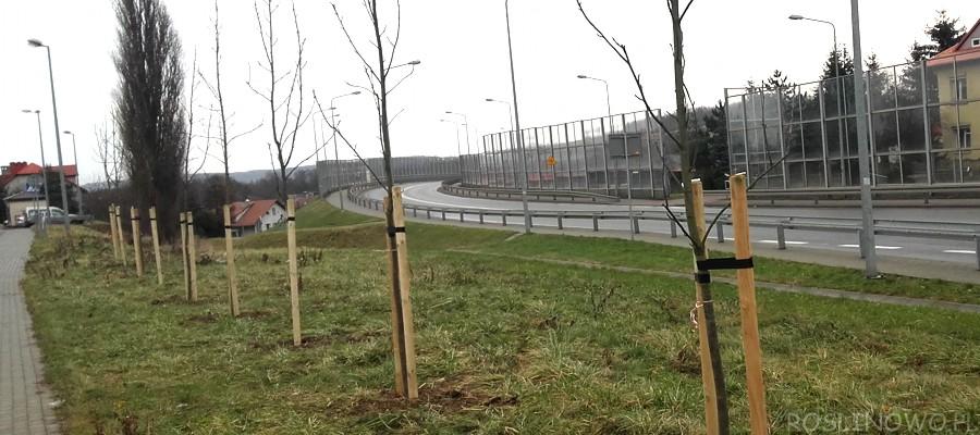 Palikowanie sadzonek drzew