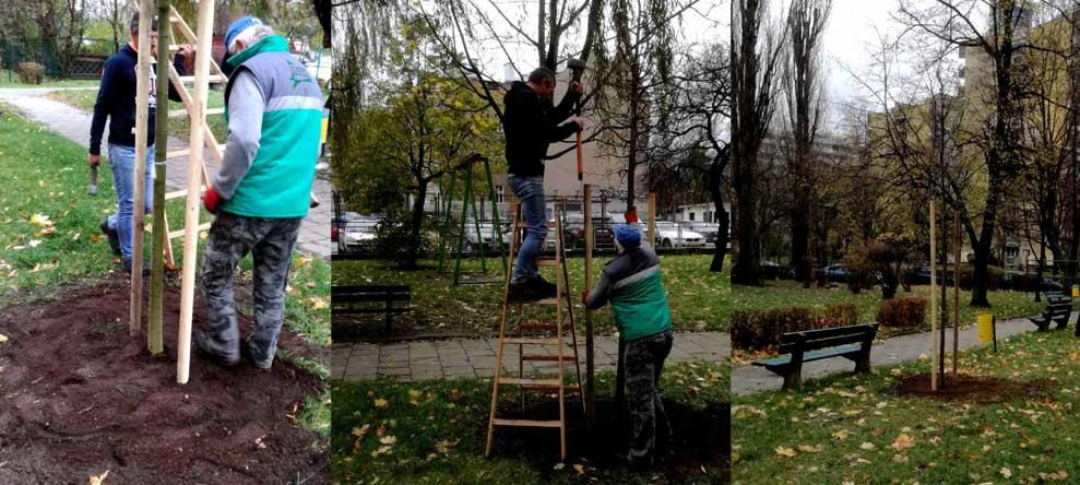 Palikowanie dużych sadzonek drzew