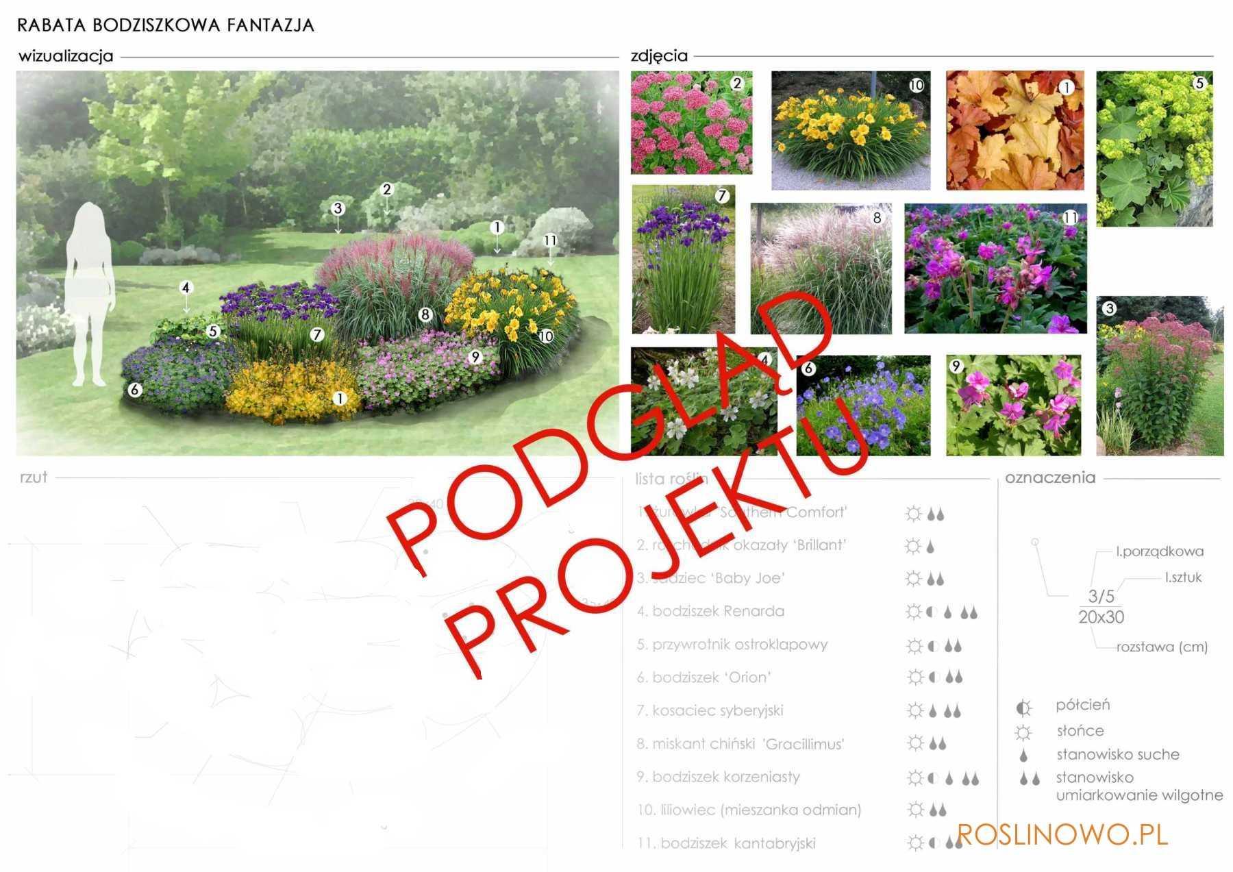projekt nasadzeń roślin w projekcie rabaty- bodziszkowa fantazja