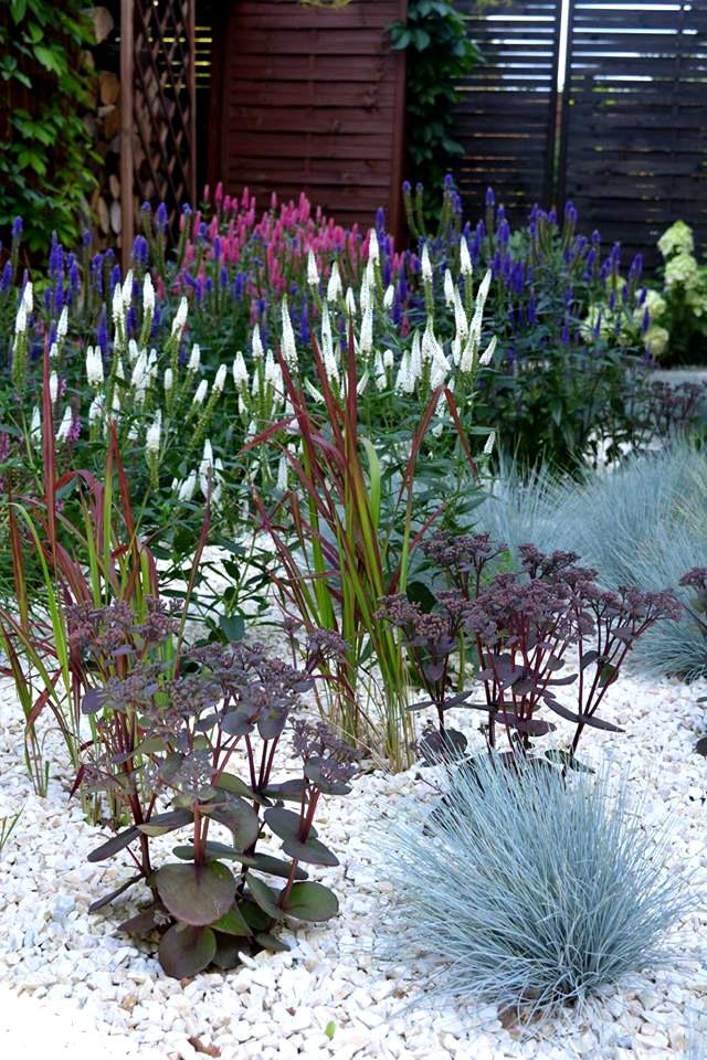 byliny miododajne wśród traw ogrodowych na rabacie bylinowej - ekspresja koloru