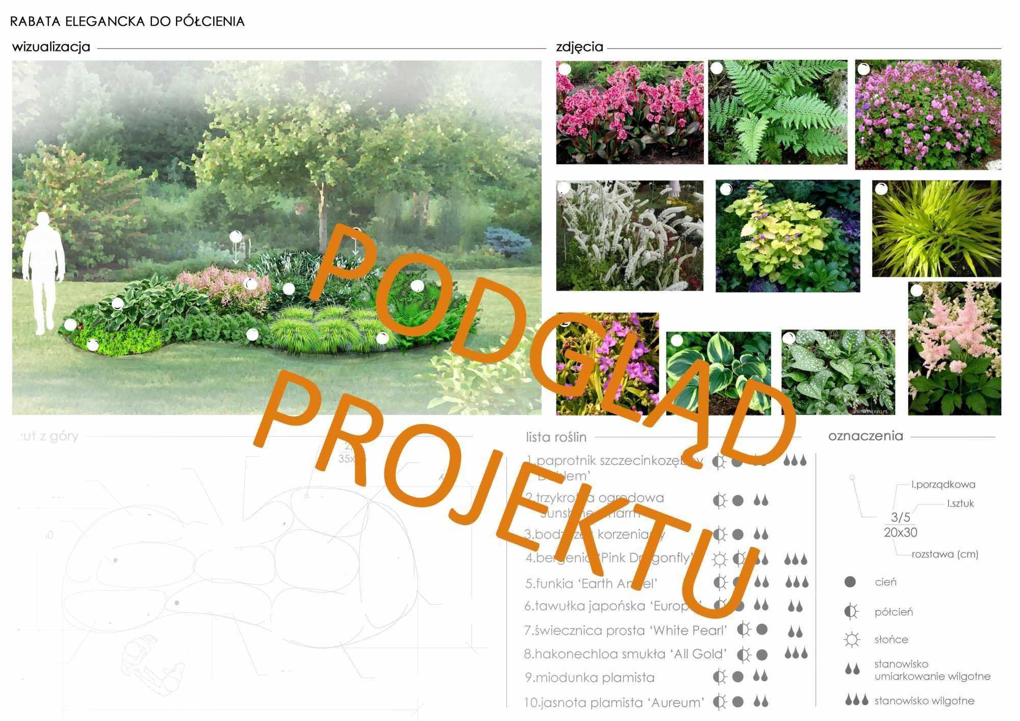projekt nasadzeń roślin rabaty eleganckiej do półcienia