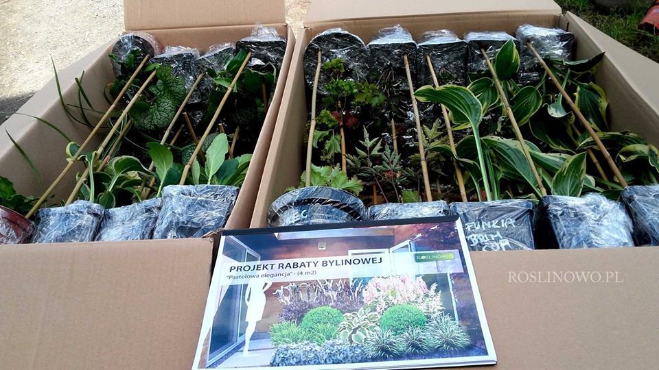 zestaw roślin wraz z projektem rabaty bylinowej
