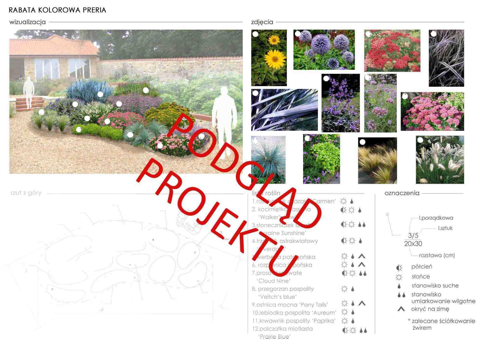 plan nasadzeń roślin do rabaty kolorowa preria