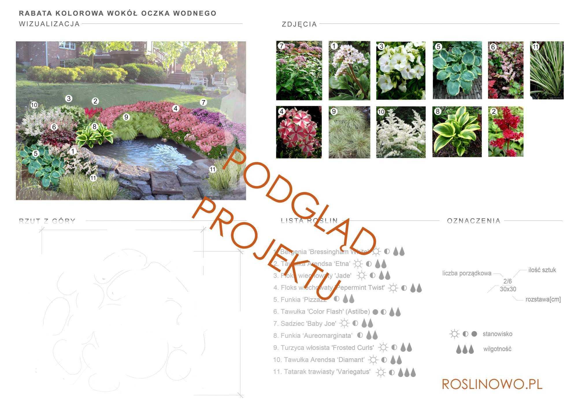 projekt nasadzeń roślin rabaty bylinowej wokół oczka wodnego