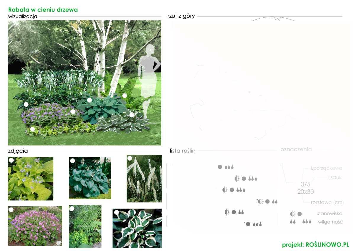 plansza zbiorcza wraz z rzutem rabaty bylinowej w cieniu drzewa.