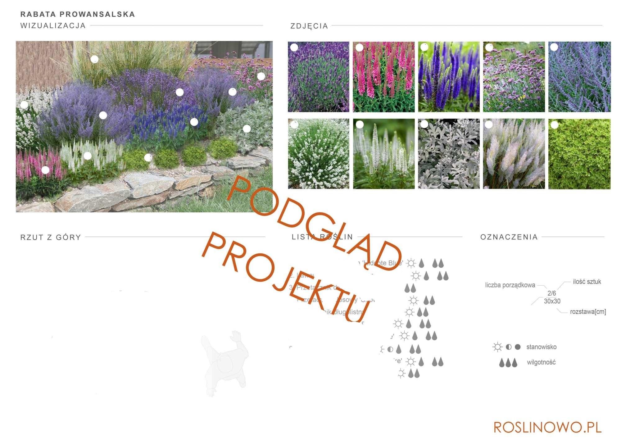 projekt nasadzeń roślin rabaty bylinowej - prowansalska