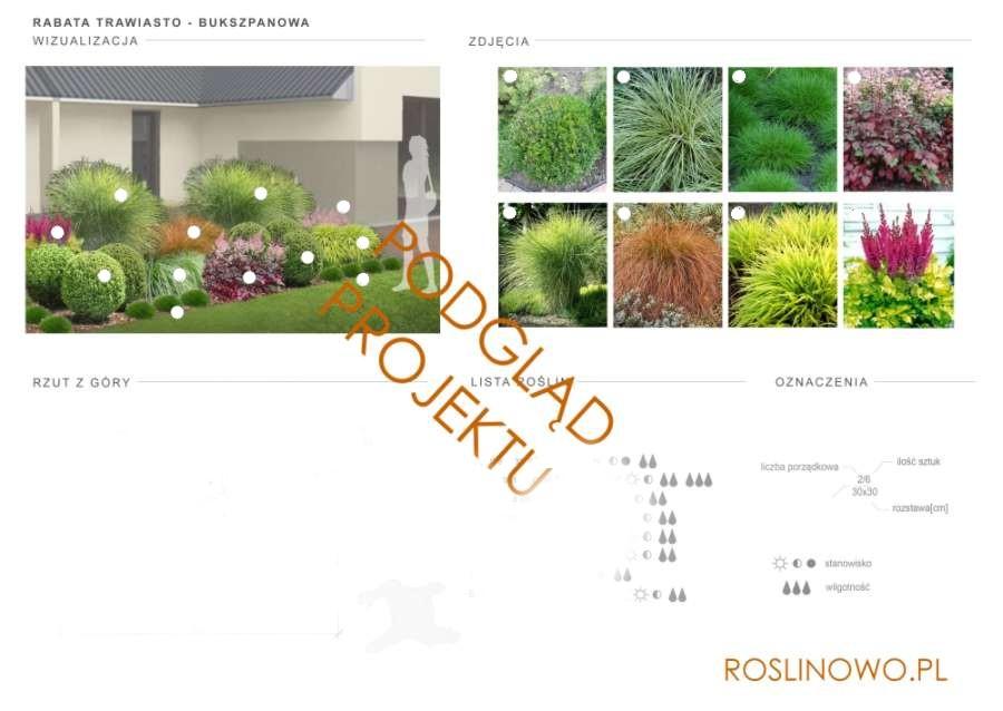 projekt nasadzeń roślin rabaty trawiasto - bukszpanowej